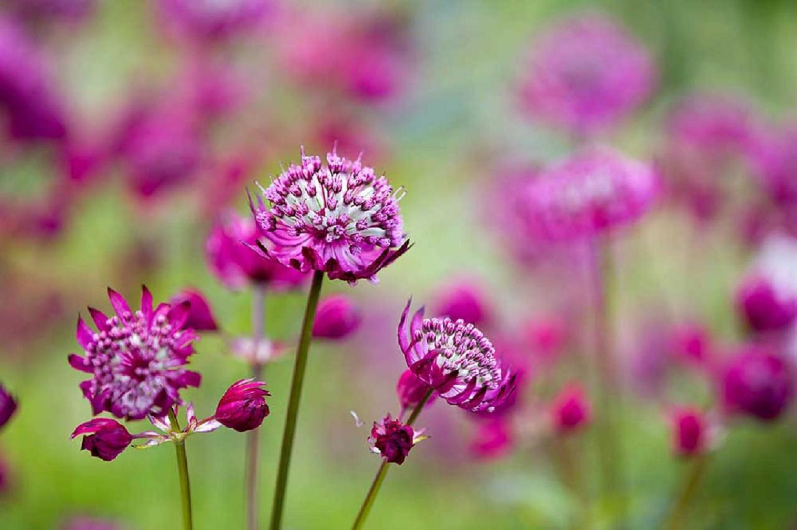 professional garden designer surrey